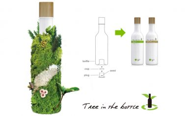 Tree in the bottle seed
